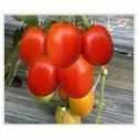 Deep Red Color Balasaheb Tomato Seeds, Packaging Size: 10 Gm