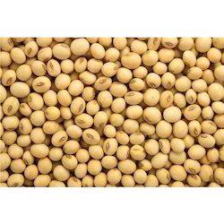 Organic Soybean, High in Protein