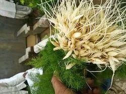 Asparagus Racemossus