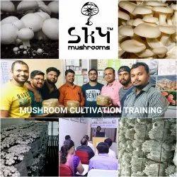 Mushroom Cultivation Training, Mushroom Farming Training in India