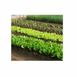 Organic Vegetables Fertilizer