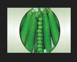 Jindal-10 Peas Seeds