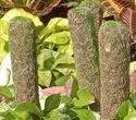 Moss Stick Packaging Net
