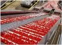 Tomato Processing Unit Project Report Consultancy
