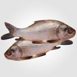 Catla Fish Home Delivery Service