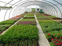 Horticulture Consultancy