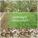 Deenanath Grass Seed