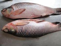 Frozen Rohu Fish, for Restaurant, Packaging Type: Plastic Bag