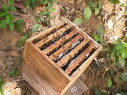 Beehive Box at Best Price in India
