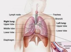 Bronchitis Homeopathic Treatments Services
