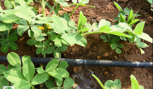 Production Line Drip Irrigation Pipe