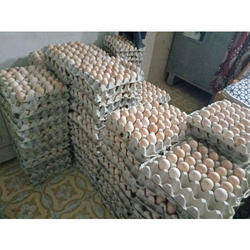 Brown Poultry Eggs