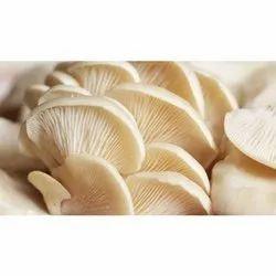 Fresh Oyster Mushroom, Packaging Size: 1 Kg, Packaging Type: Carton
