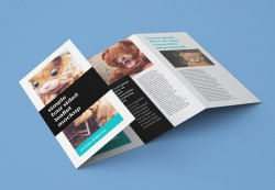 Colored Printed Brochure