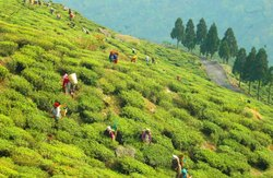 Goa Hill Station Packages