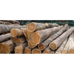 Nigeria Teak Wood Logs