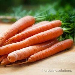 Carrot Oil