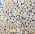 Strychnos Potatorum polished