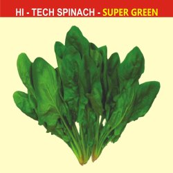 Super Green Spinach Seeds, Pack Size: 500 Gm