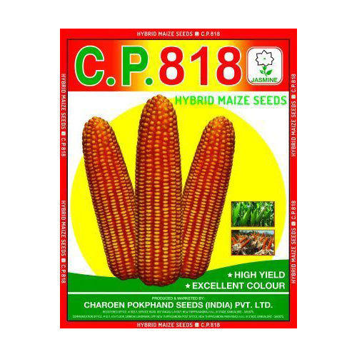Jasmine Hybrid CP 818 Maize Seeds, Pack Size: 4Kg