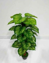 Artificial Money Plant Tree