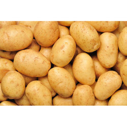 Indian Cold Storage Organic Potato, Packaging Size: 15-20 Kg