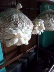 Mushroom Cultivation Training, Mushroom Farming Training in