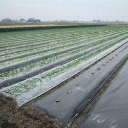 Agriculture UV Mulch Film