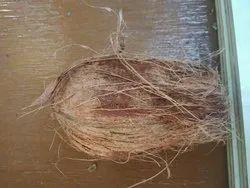Fresh Medium Coconut