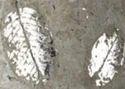 Leave Foiling Silver (LFS) Light