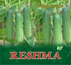 Reshma F-1 Cucumber Seed
