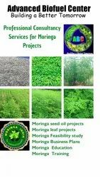 Online Global Moringa Project Consultancy