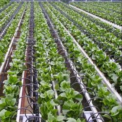 Systems In Drip Irrigation
