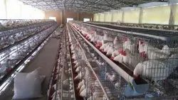 California Poultry Cage