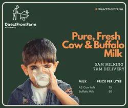 DirectFromFarm Raw Chilled Buffalo Milk, Fat: 8%, Quantity Per Pack: 1