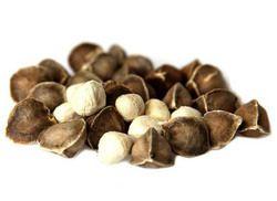 Moringa Seeds, For Medicine And Plantation