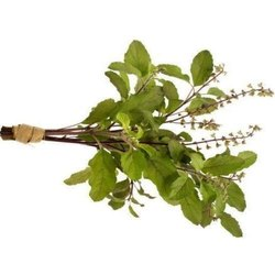 Rama Tulsi TBC - Holy Basil Leaves Tea Bag Cut