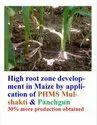 Mycorrhiza Granule
