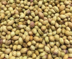 Brown Dhaniya Seed, Packaging Type: Packet, Packaging Size: 100g
