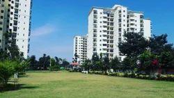 Lawn Development Service