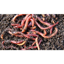 Agro Vermicompost (Biological) Premium Quality, Packaging Type: Packet, Packaging Size: 5-50 Kg