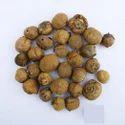 Ks Teak Seeds- Tectona Grandis Seeds