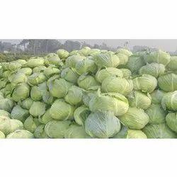 A Grade Pan India Green Cabbage, Gunny Bag, 50 Kg