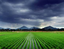 Rice And The Environment Research Services