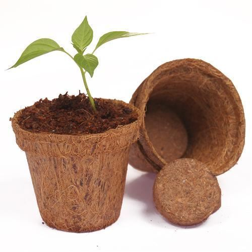 Brown Coir Pot