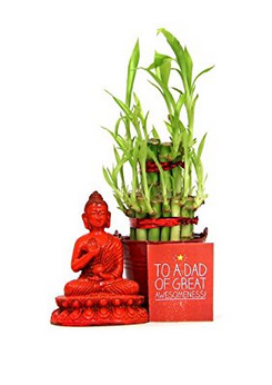 Lucky Bamboo Plant with Buddha