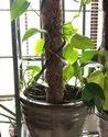COIR GARDEN Gardening Coir Pole