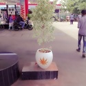 Elegant Outdoor Cement Plant Pot