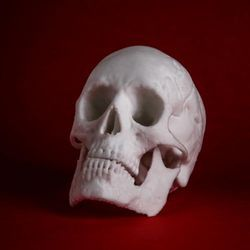 Skull Shape 3D Modeling Service