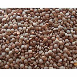 25-50 kg Brown Whole Masoor Dal, Packaging: PP Bag
